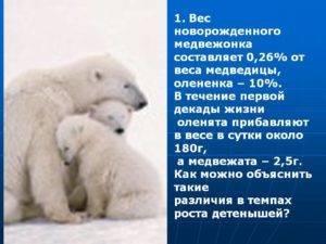 Сколько весит медвежонок