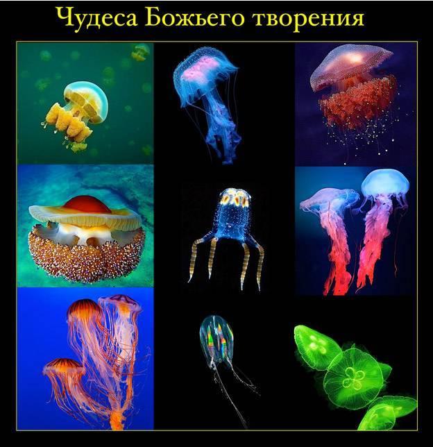 Каков принцип движения медузы