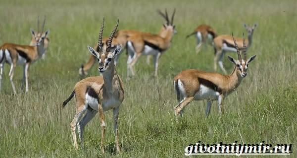 Интересные факты о животных африки