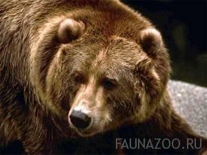 Места обитания животных в россии