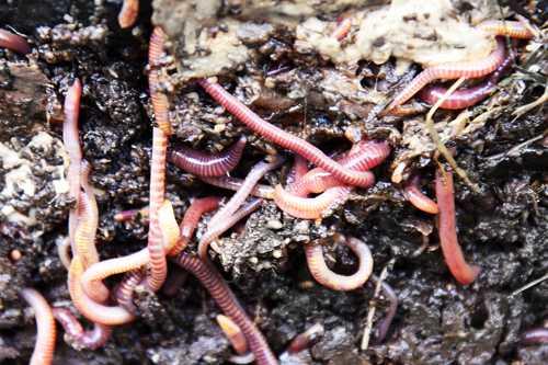 Живые организмы в почве