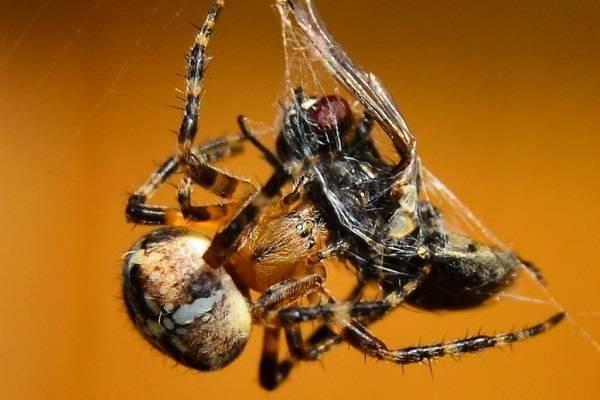 Среда обитания паукообразных