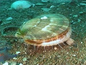 Моллюски фото с названиями
