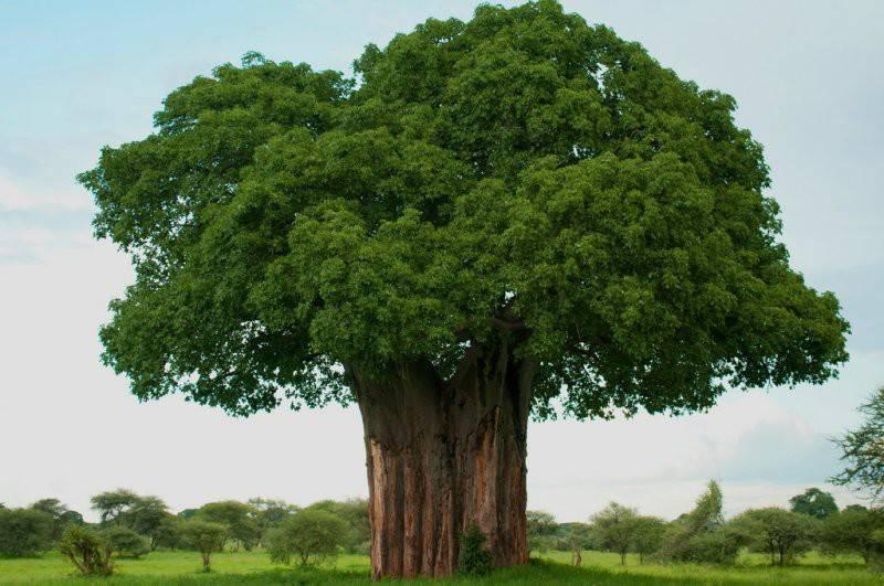 Африка природа и животные