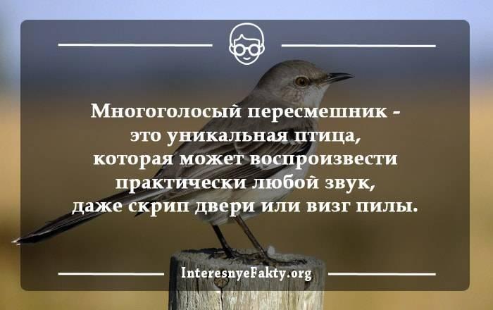 Интересные факты о домашних птицах