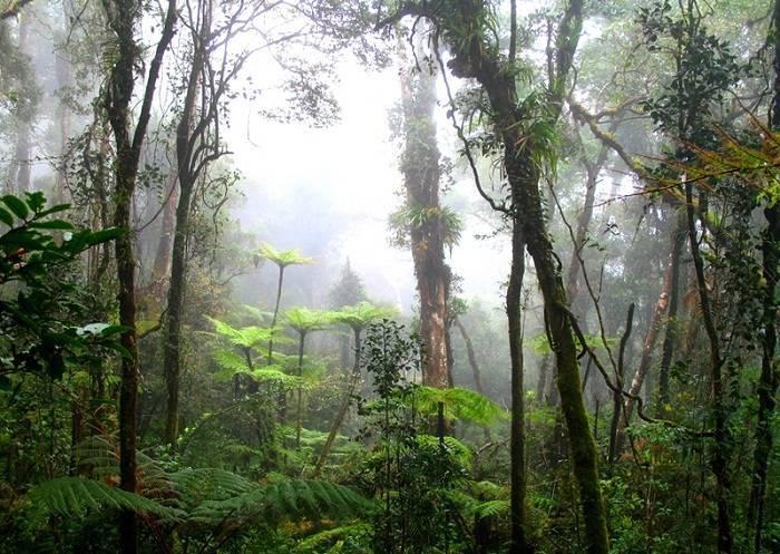 Географическое положение экваториального леса