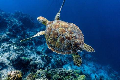 Средняя скорость черепахи