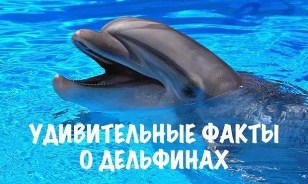 Дельфин чем питается
