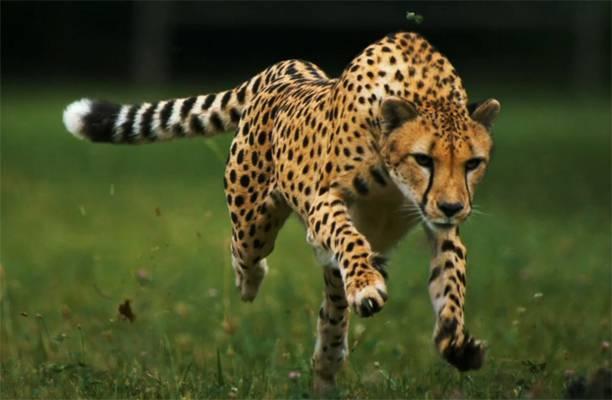 Самые быстрые животные в мире топ 10