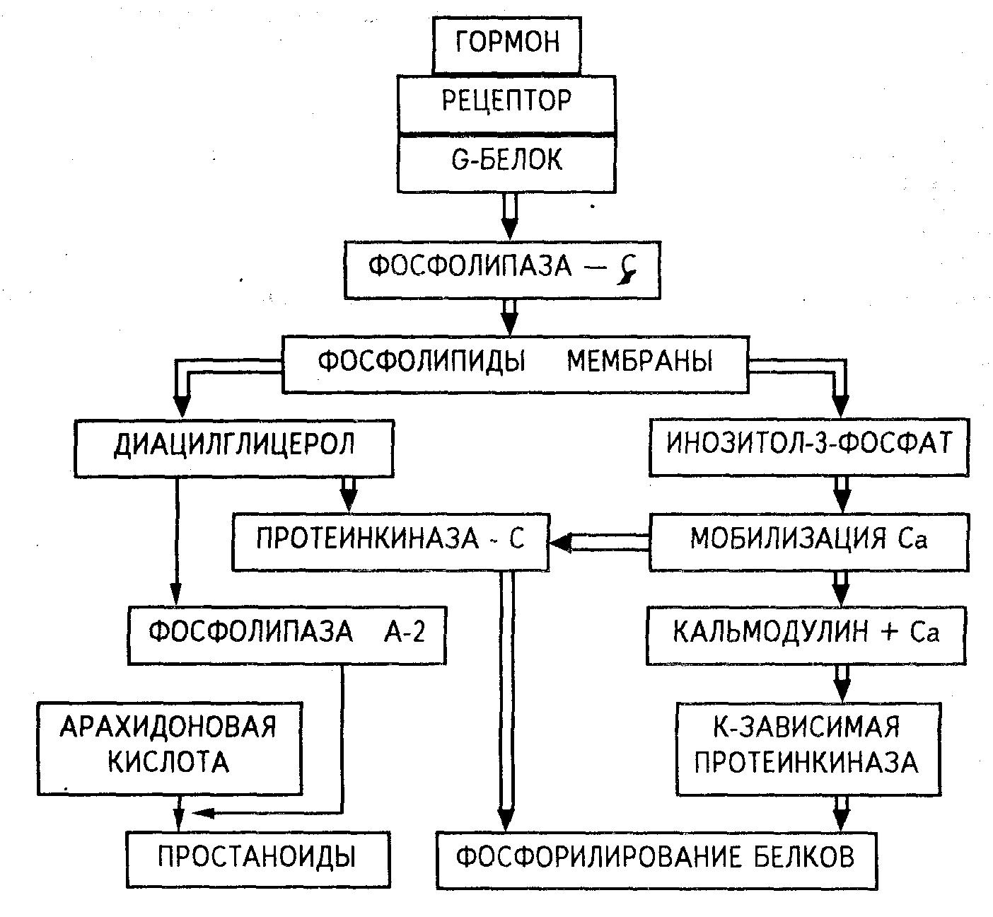 Система мембран