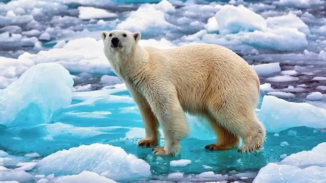Самый большой медведь в россии