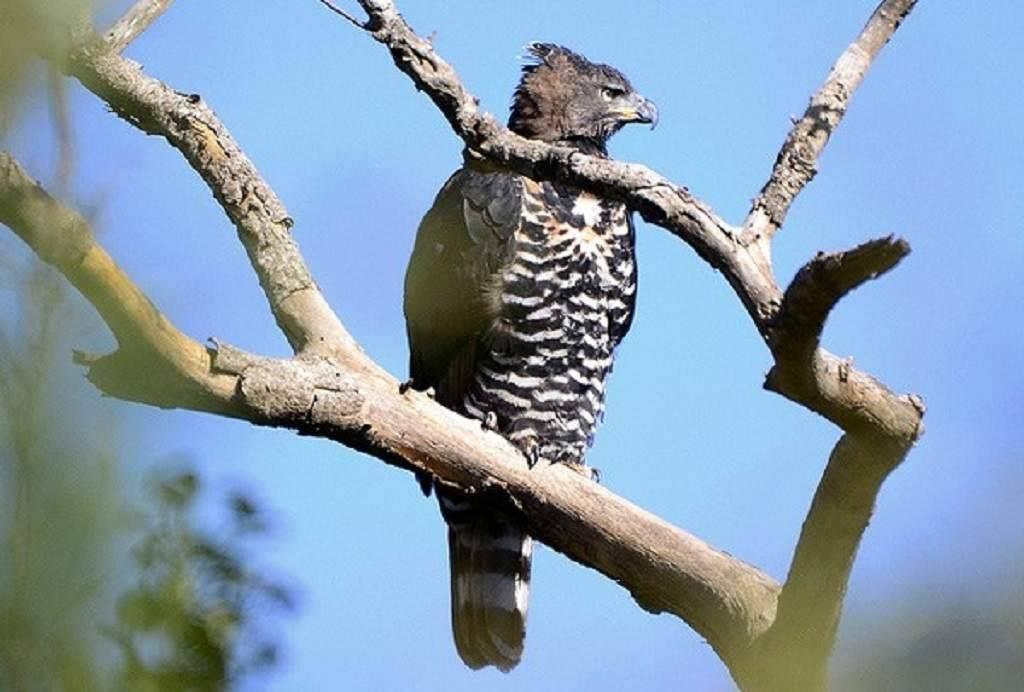 Самая большая сова в мире фото