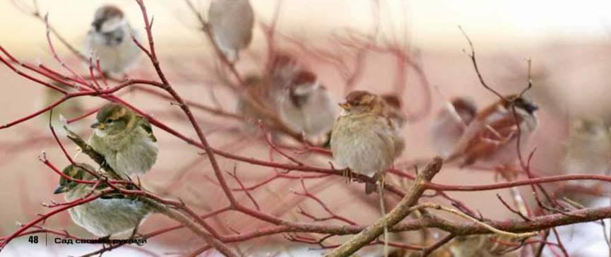 Как помочь птицам в зимнее время