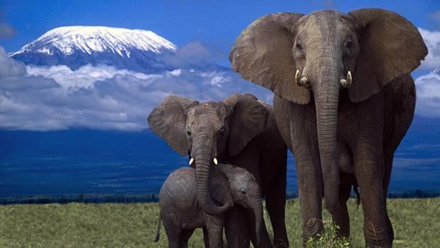 Информация про слона