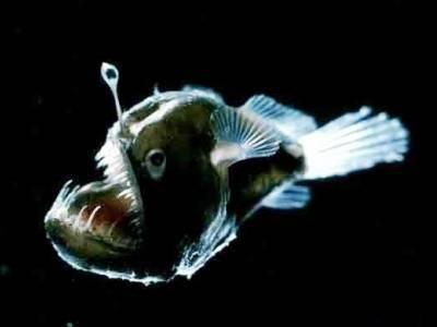 Информация про рыб