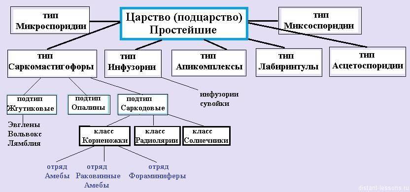 Классификация одноклеточных