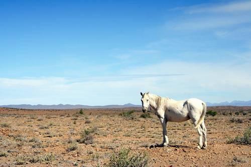 Пустыни африки список