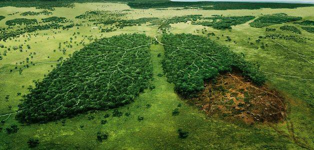 Наиболее опасной причиной обеднения биологического разнообразия