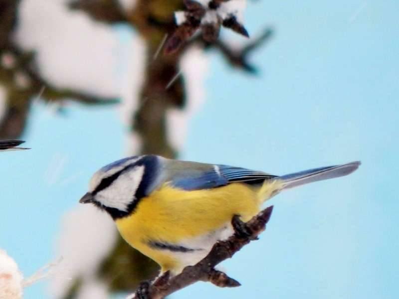 Плотоядные птицы список