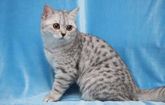Какие кошки самые красивые
