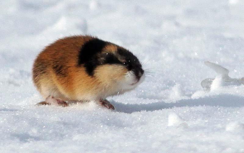 Кто живет на северном полюсе животные