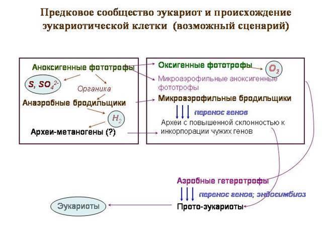 Первые эукариоты