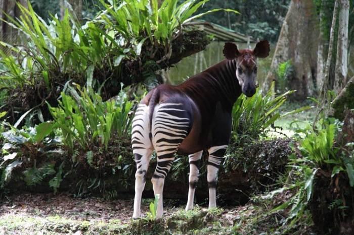 Редкие животные мира фото и названия