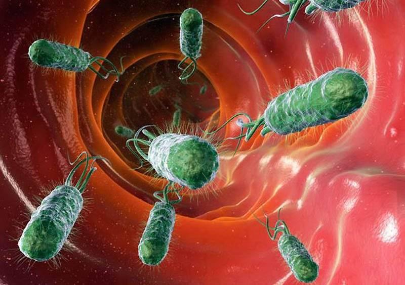 Бактерии интересные факты для школьников
