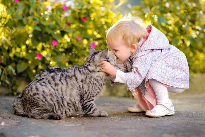 Какого кота лучше завести для ребенка