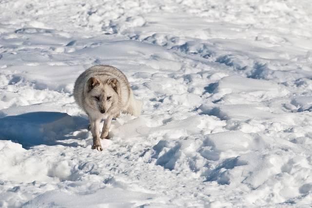 Особенности живой природы зоны арктических пустынь