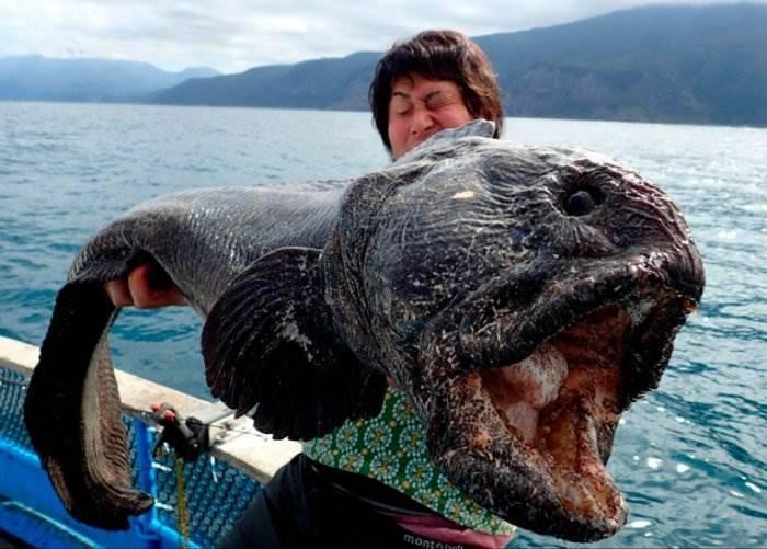 Странные рыбы фото