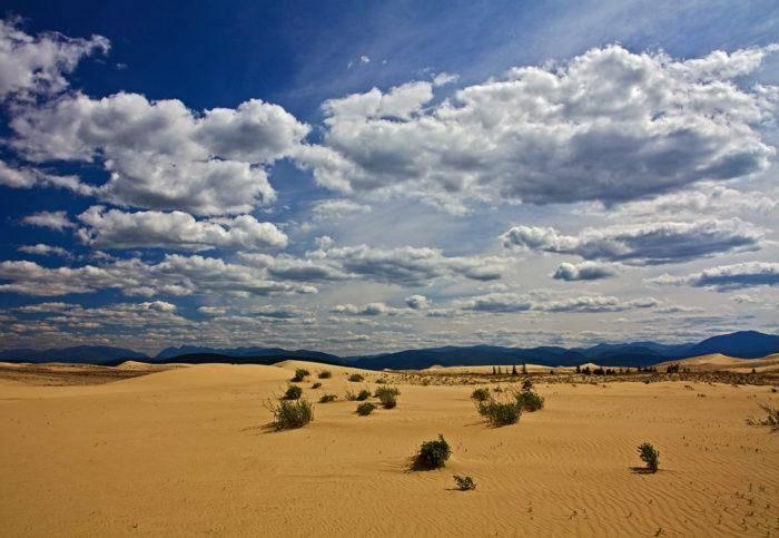 Растительность пустынь и полупустынь