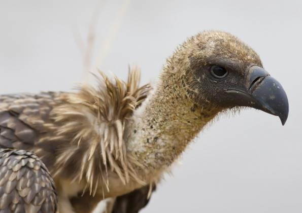 Самые страшные птицы в мире фото