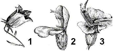 Гетерогамия примеры