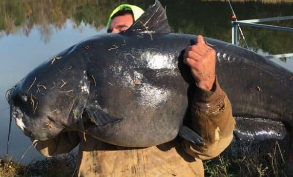 Самая поедаемая рыба в мире это