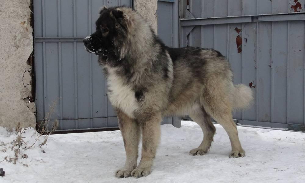 Породы лохматых собак фото и название