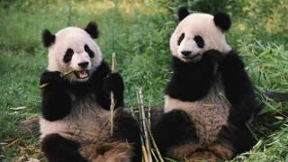 Человек панда