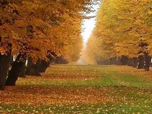 Лермонтов стихи про осень