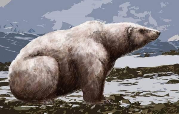 К кому относятся медведи