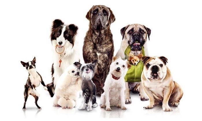 Породы собак которых можно держать в квартире