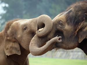 Интересные факты про слонов