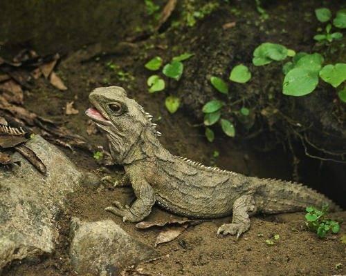 Систематика рептилий