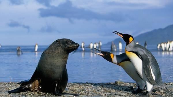 Животные обитающие в антарктиде