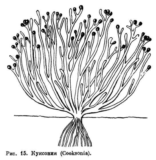 Первые наземные виды организмов появились в