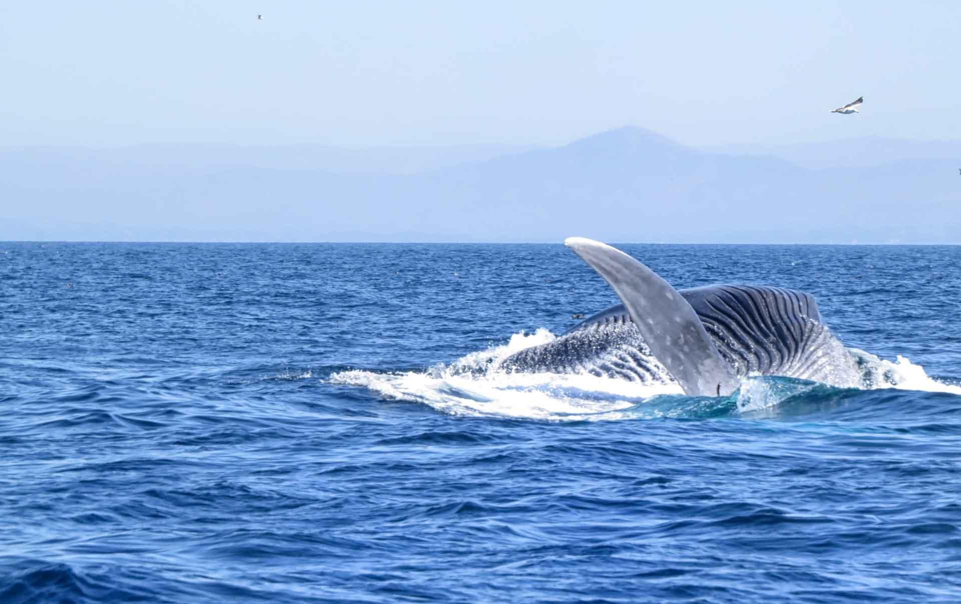 Самка кита как называется