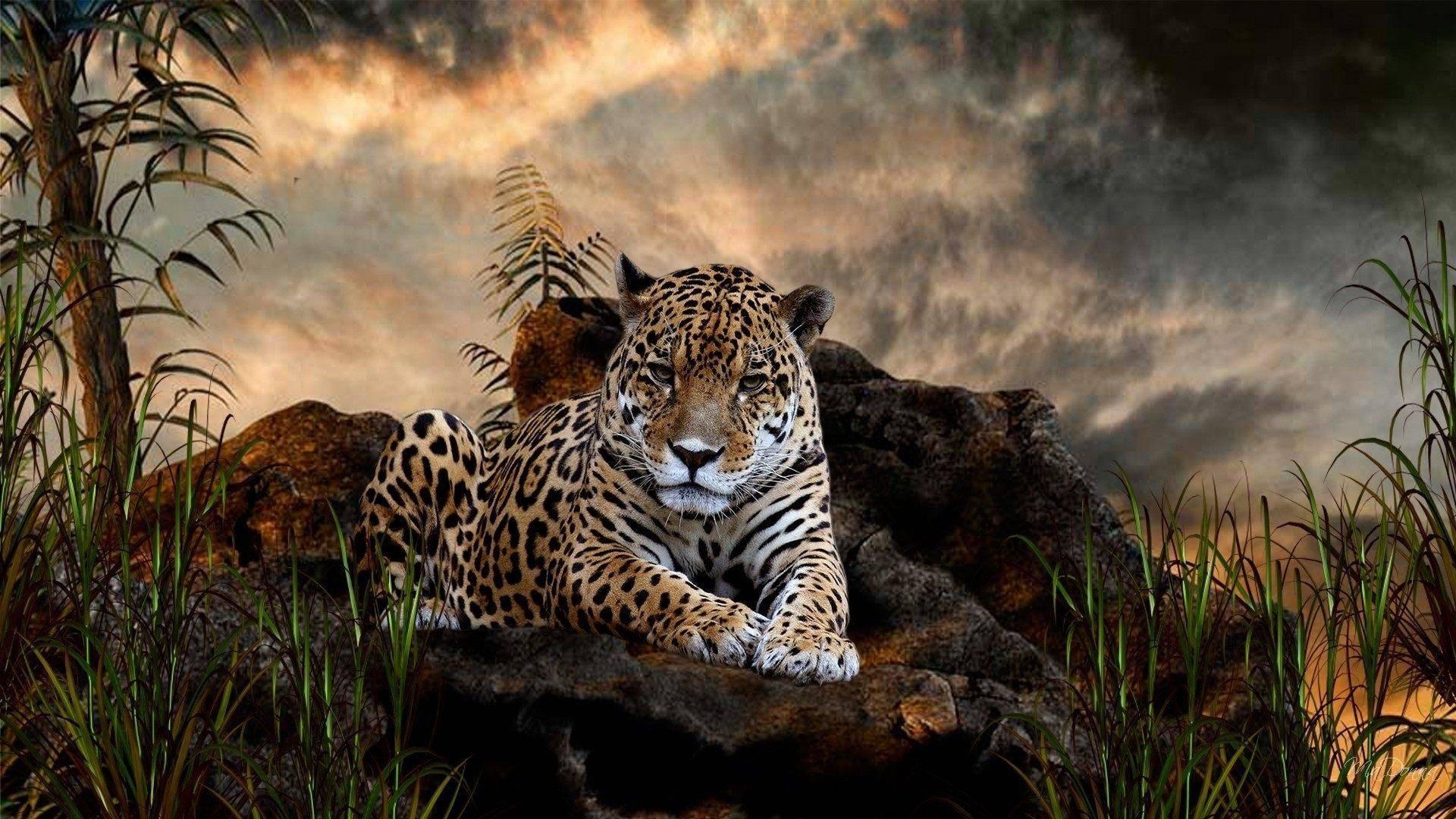Ягуар зверь фото
