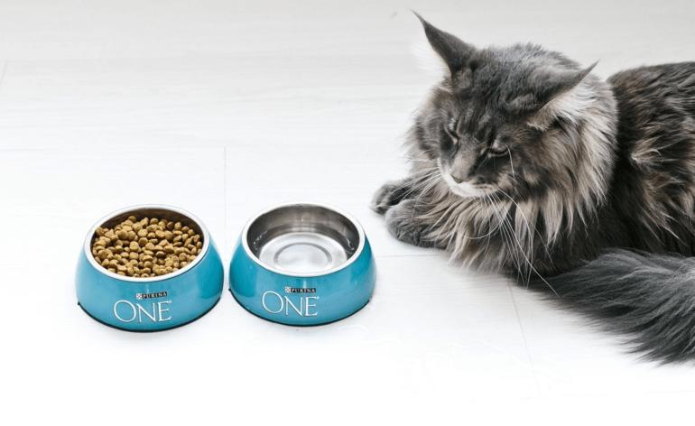 Сколько раз в день нужно кормить кошку