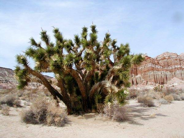 Какие растения можно встретить в пустыне