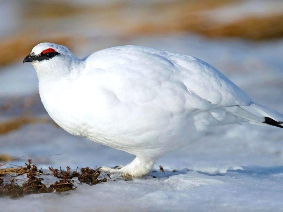 Субарктический климат средняя температура января