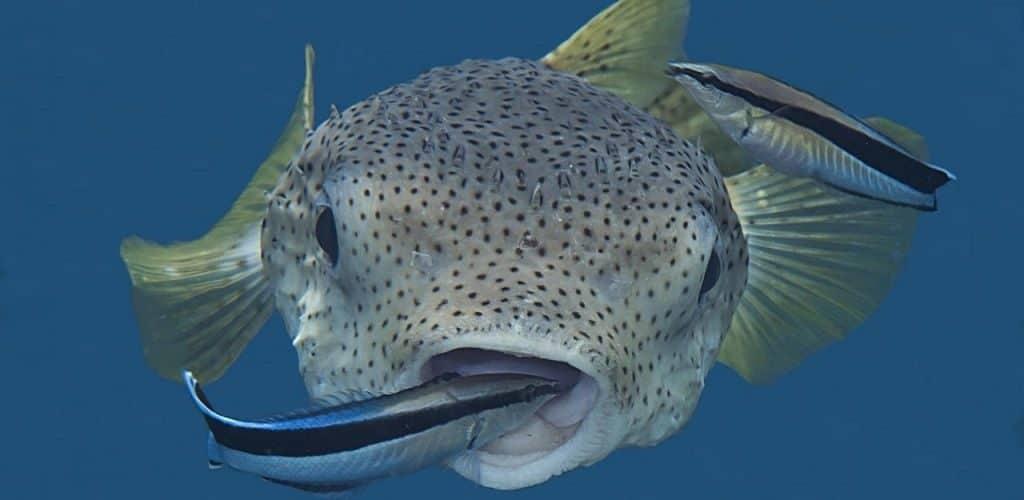 Интересные названия рыб